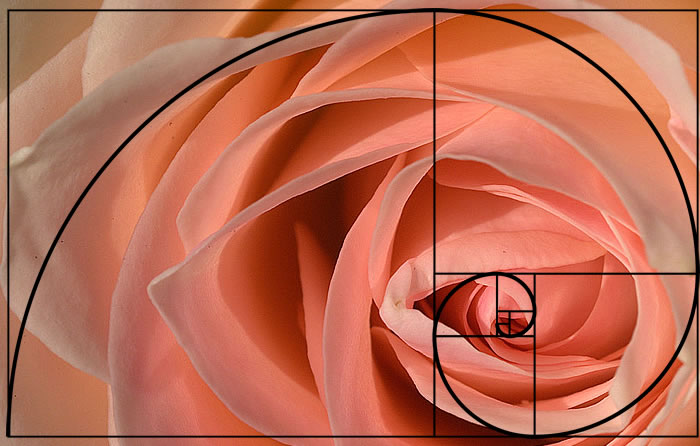 Fotografija i sve vezano uz to - Page 2 Golden-spiral-applied-photography-21